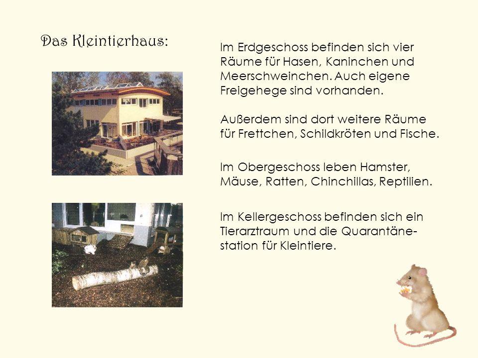 Das Kleintierhaus: Im Erdgeschoss befinden sich vier Räume für Hasen, Kaninchen und Meerschweinchen. Auch eigene Freigehege sind vorhanden.