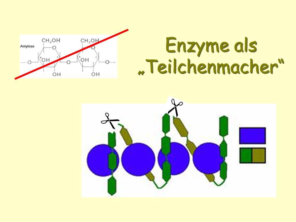 """Enzyme als """"Teilchenmacher"""
