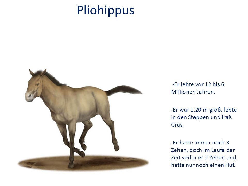 Pliohippus -Er lebte vor 12 bis 6 Millionen Jahren.