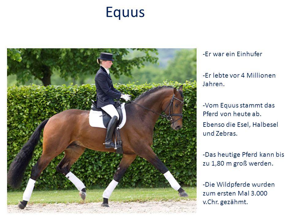 Equus -Er war ein Einhufer -Er lebte vor 4 Millionen Jahren.