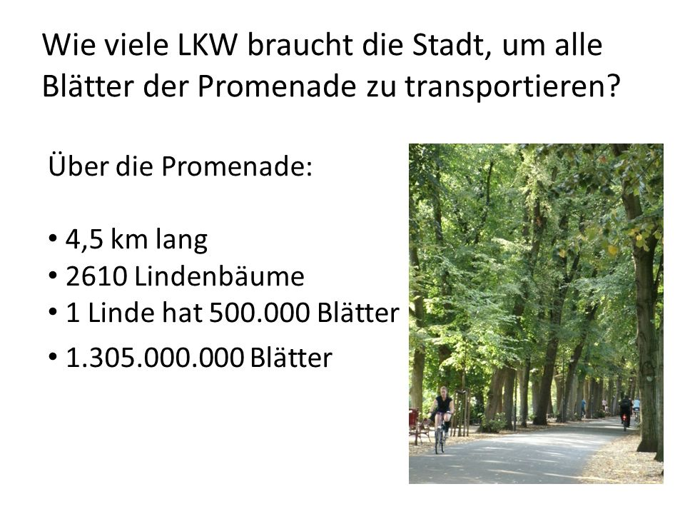 Wie viele LKW braucht die Stadt, um alle Blätter der Promenade zu transportieren