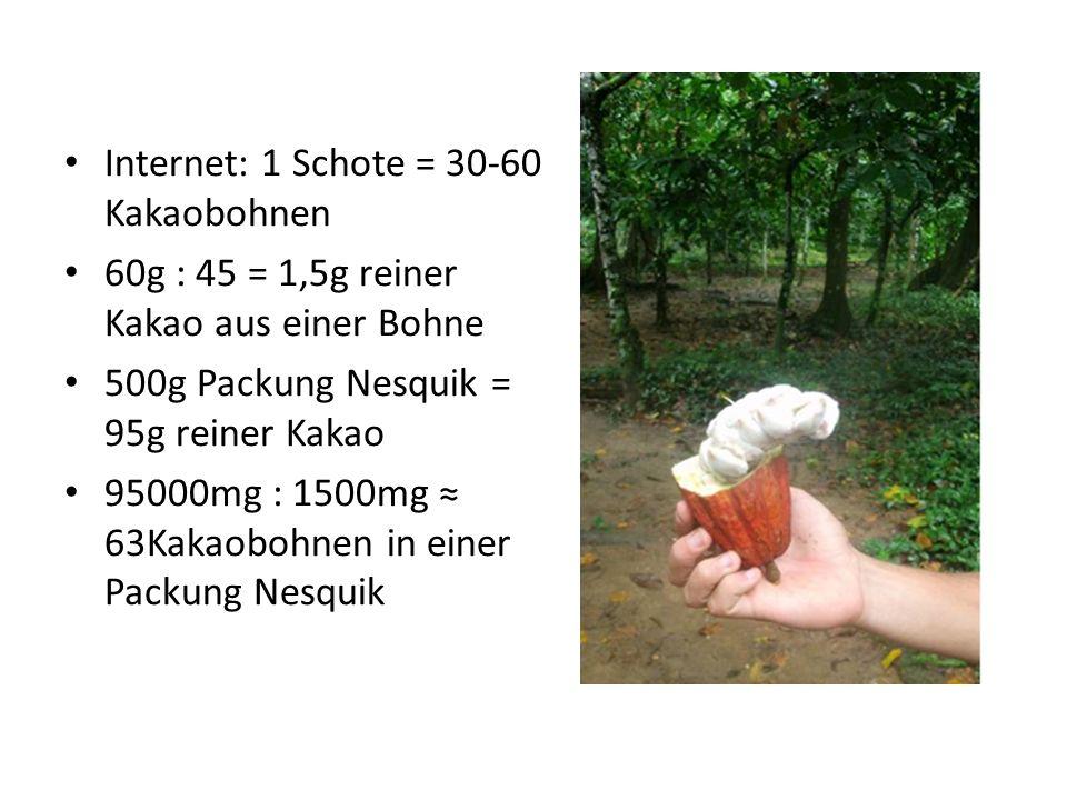 Internet: 1 Schote = 30-60 Kakaobohnen