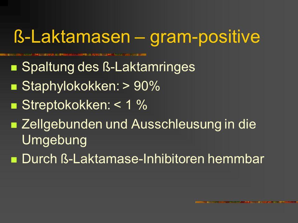 ß-Laktamasen – gram-positive