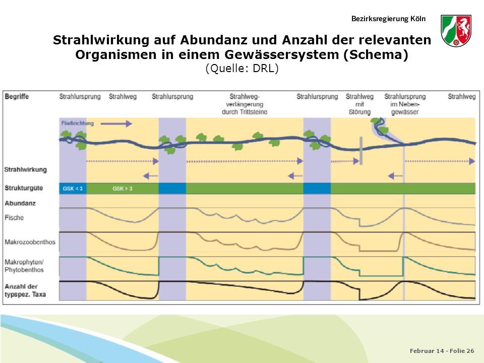 Strahlwirkung auf Abundanz und Anzahl der relevanten Organismen in einem Gewässersystem (Schema) (Quelle: DRL)