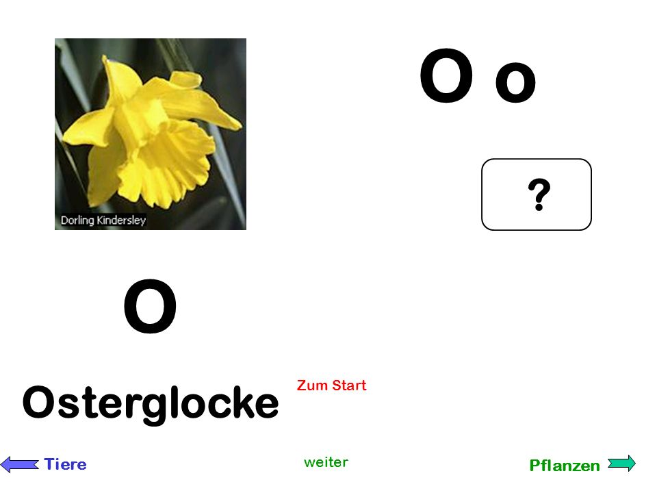 O o O Osterglocke Zum Start Tiere weiter Pflanzen