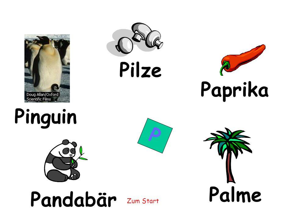 Pilze Paprika Pinguin P Palme Pandabär
