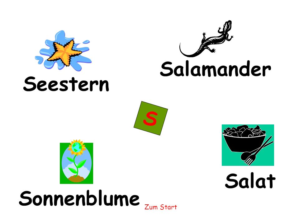 Salamander Seestern S Salat Sonnenblume