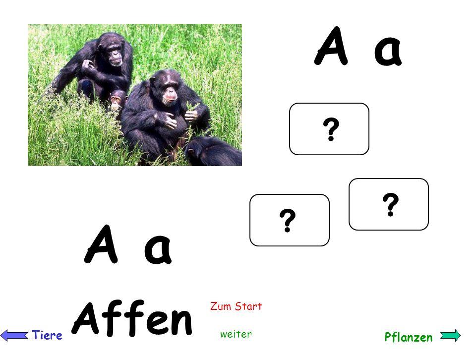 A a A a a Affen Zum Start Tiere weiter Pflanzen