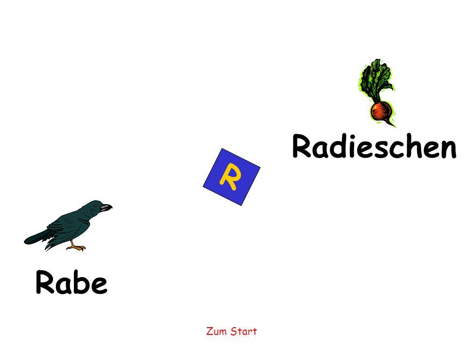 Radieschen R Rabe Zum Start