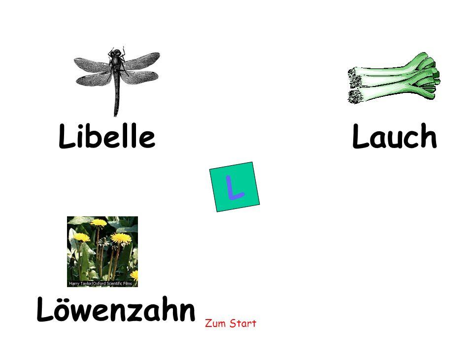 Libelle Lauch L Löwenzahn