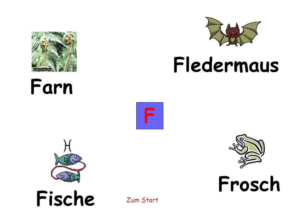 Fledermaus Farn F Frosch Fische
