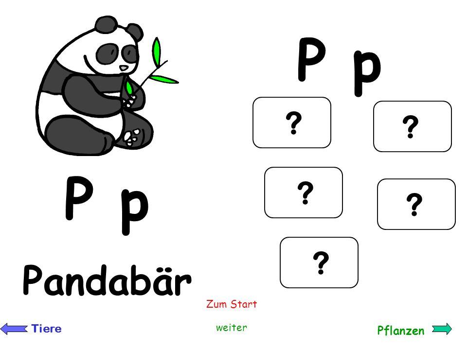 P p P p Pandabär Zum Start Tiere weiter Pflanzen