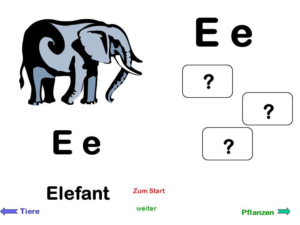 E e E e Elefant Zum Start weiter Tiere Pflanzen