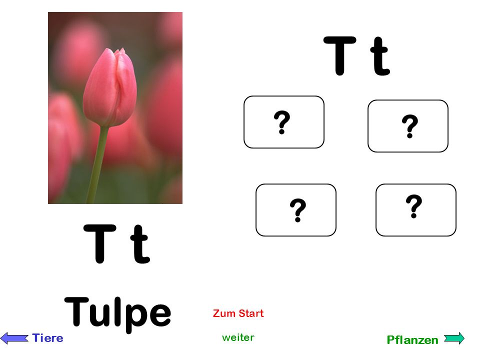 T t T t Tulpe Zum Start Tiere weiter Pflanzen