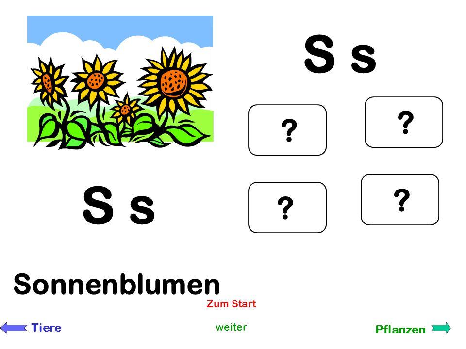 S s S s Sonnenblumen Zum Start Tiere weiter Pflanzen