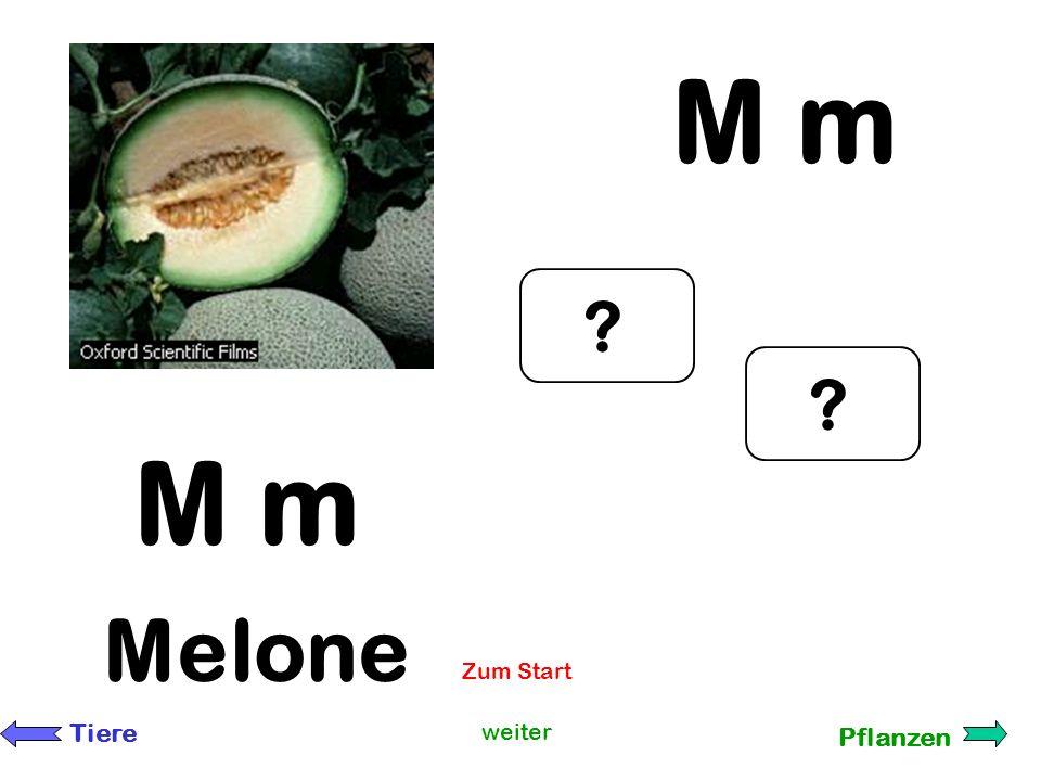 M m M m Melone Zum Start Tiere weiter Pflanzen