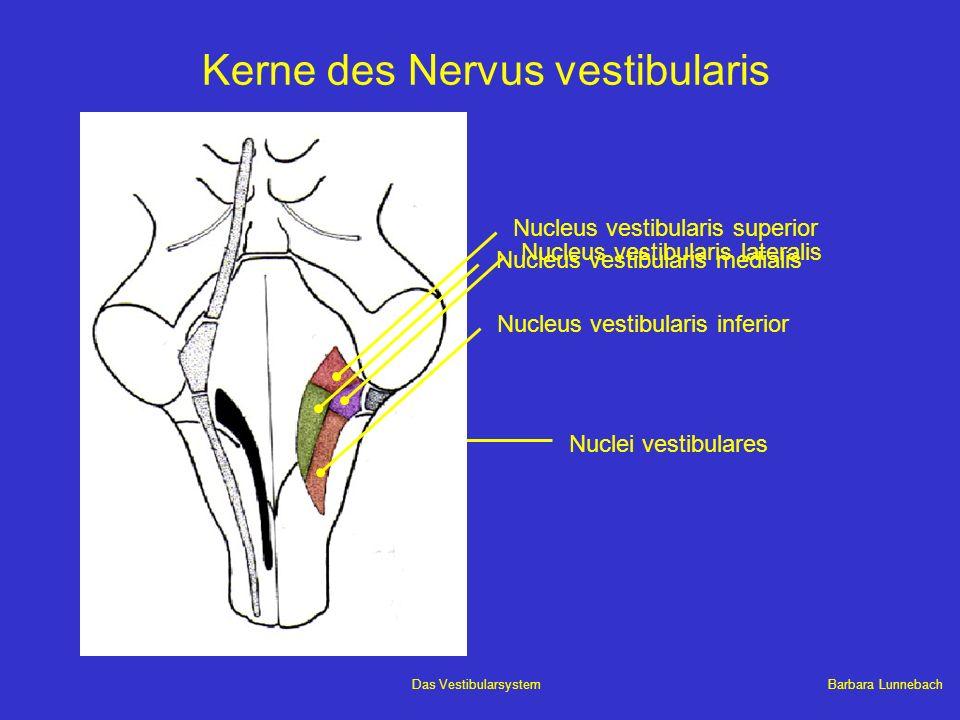 Kerne des Nervus vestibularis