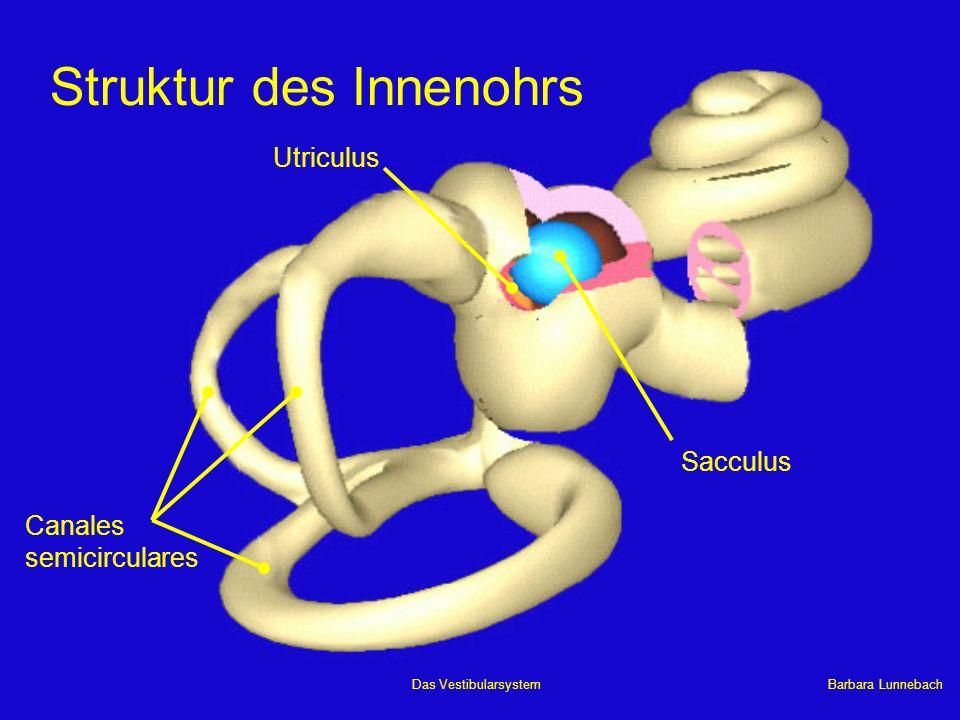 Struktur des Innenohrs