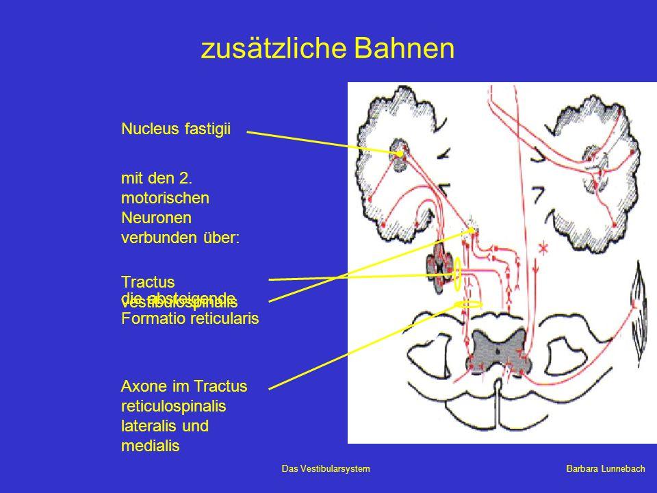 zusätzliche Bahnen Nucleus fastigii