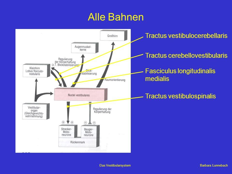 Alle Bahnen Tractus vestibulocerebellaris