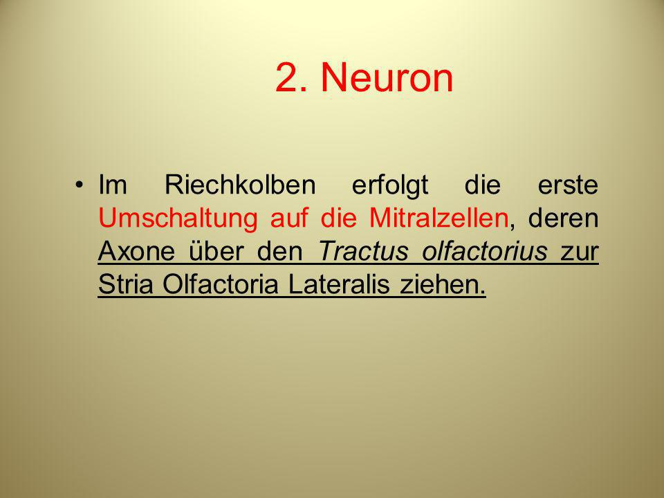 2. Neuron