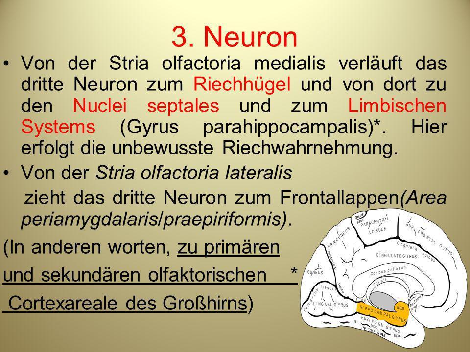 3. Neuron