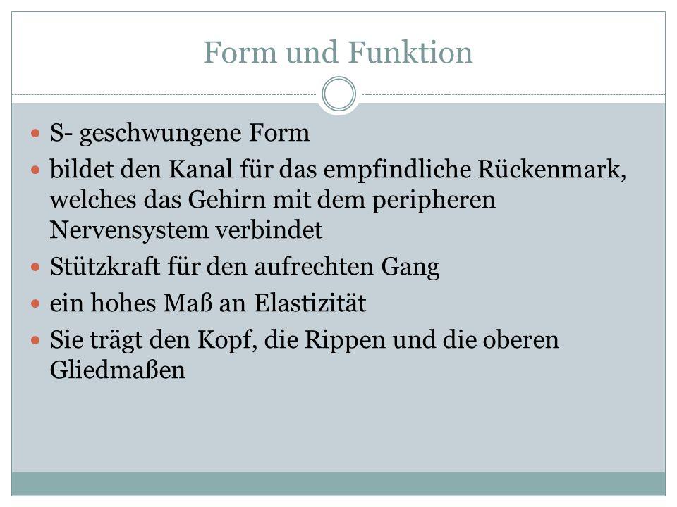 Form und Funktion S- geschwungene Form