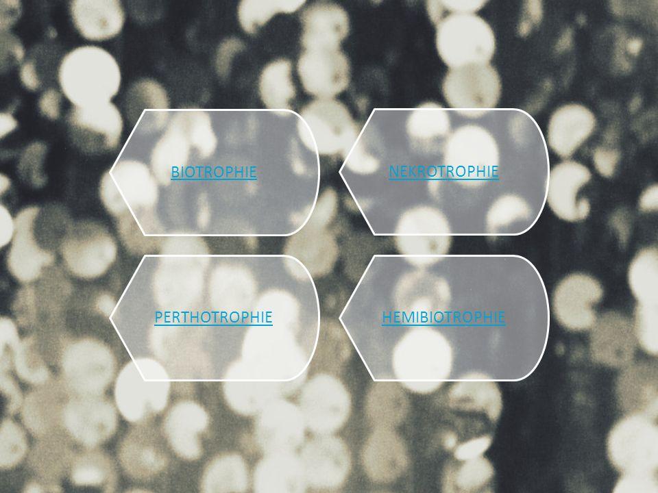 BIOTROPHIE NEKROTROPHIE PERTHOTROPHIE HEMIBIOTROPHIE