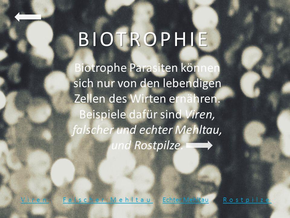 BIOTROPHIE