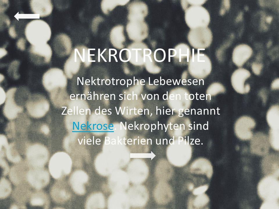 NEKROTROPHIE Nektrotrophe Lebewesen ernähren sich von den toten Zellen des Wirten, hier genannt Nekrose.