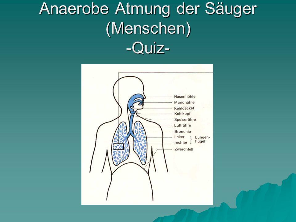Anaerobe Atmung der Säuger (Menschen) -Quiz-