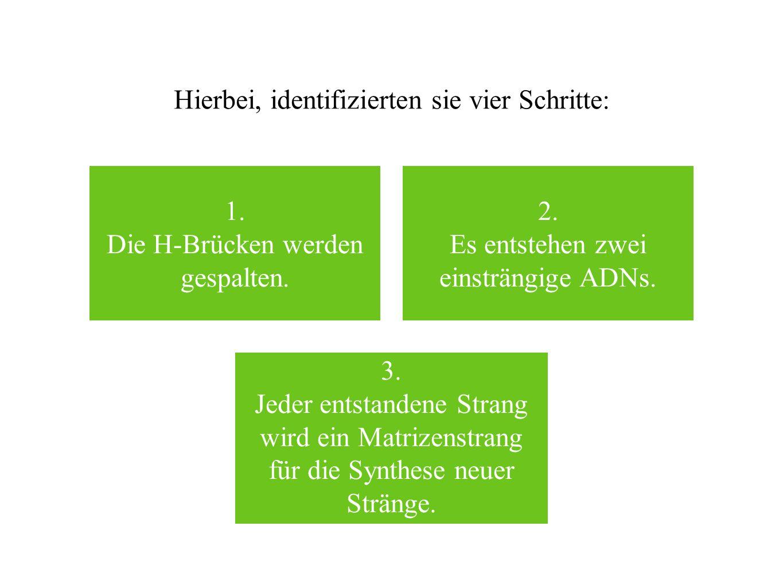 Hierbei, identifizierten sie vier Schritte: