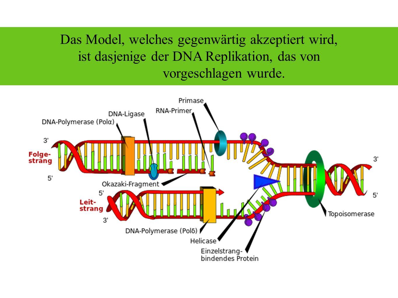 Das Model, welches gegenwärtig akzeptiert wird, ist dasjenige der DNA Replikation, das von Okazaki vorgeschlagen wurde.