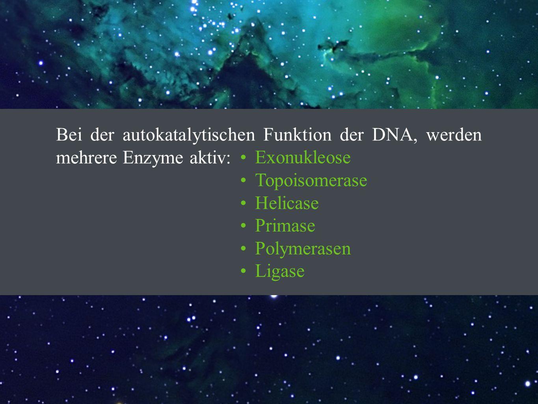 Bei der autokatalytischen Funktion der DNA, werden mehrere Enzyme aktiv: