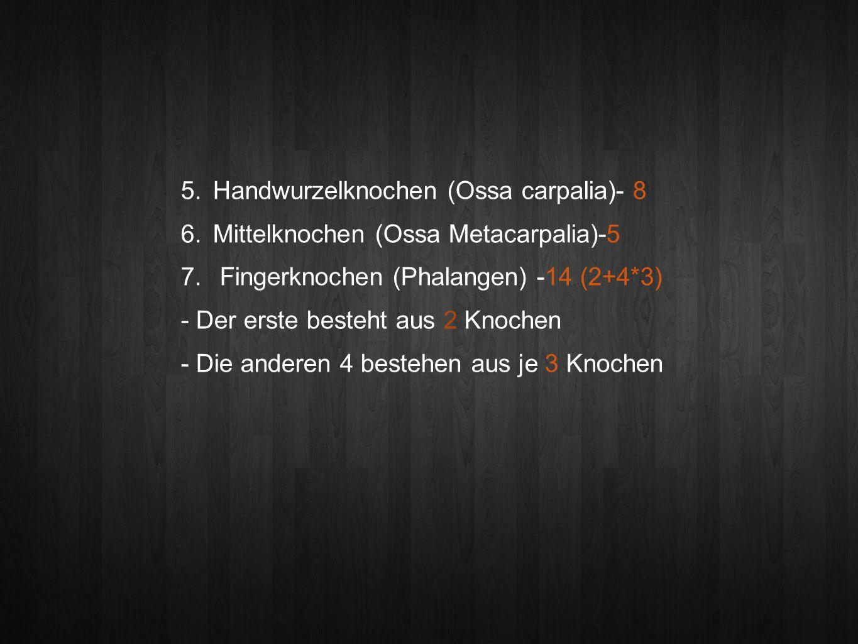 Handwurzelknochen (Ossa carpalia)- 8