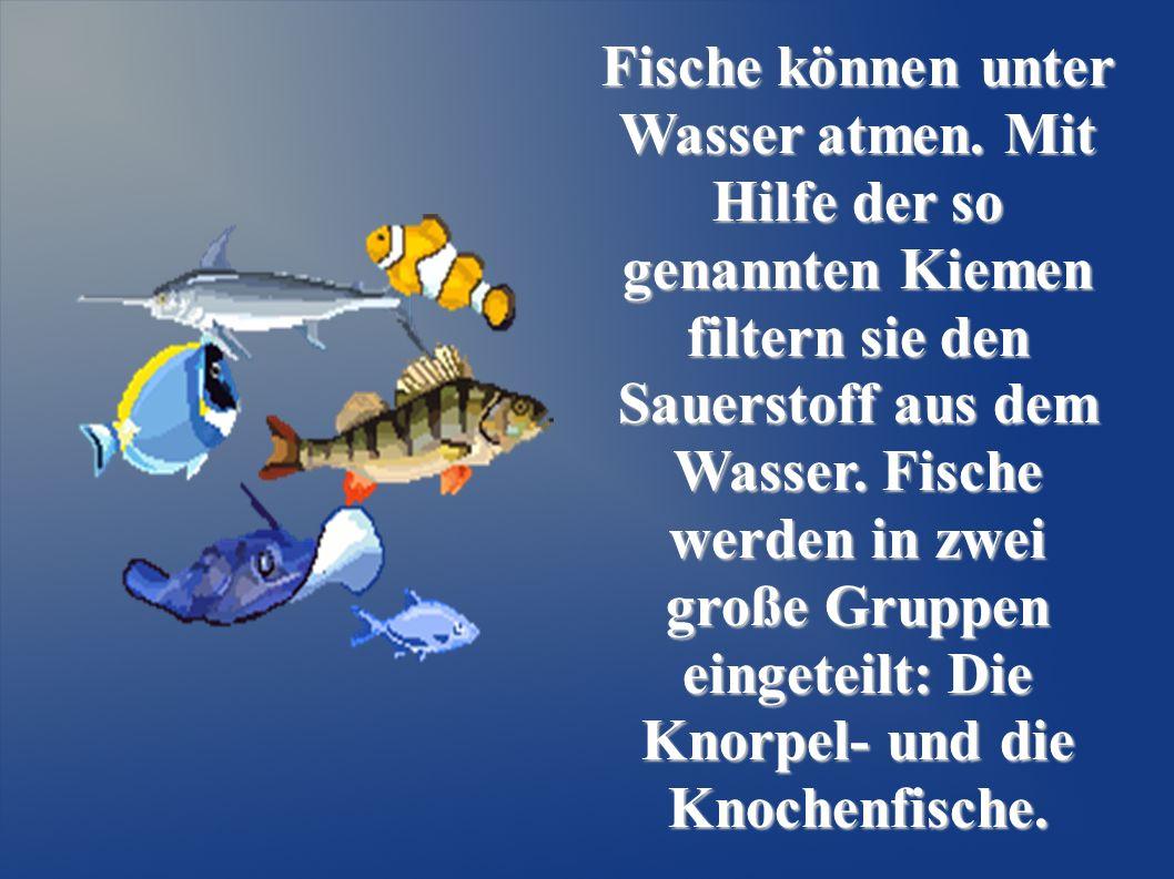 Fische können unter Wasser atmen