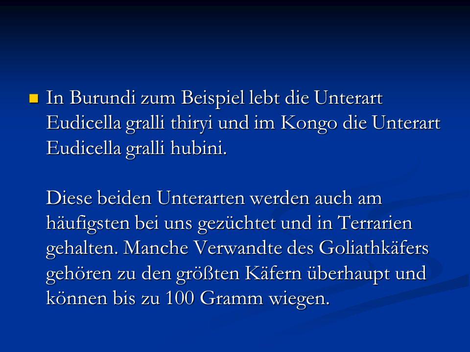 In Burundi zum Beispiel lebt die Unterart Eudicella gralli thiryi und im Kongo die Unterart Eudicella gralli hubini.