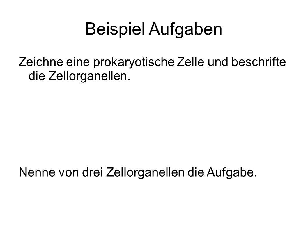 Großzügig Zelle Anatomie Und Funktionen Galerie - Menschliche ...