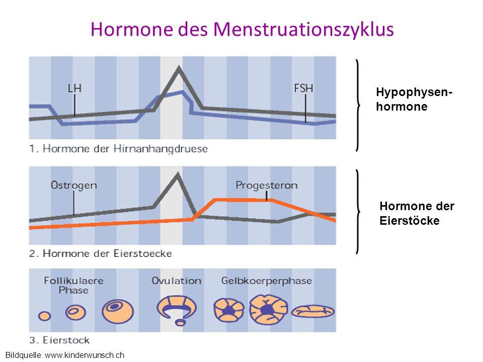 Hormone des Menstruationszyklus
