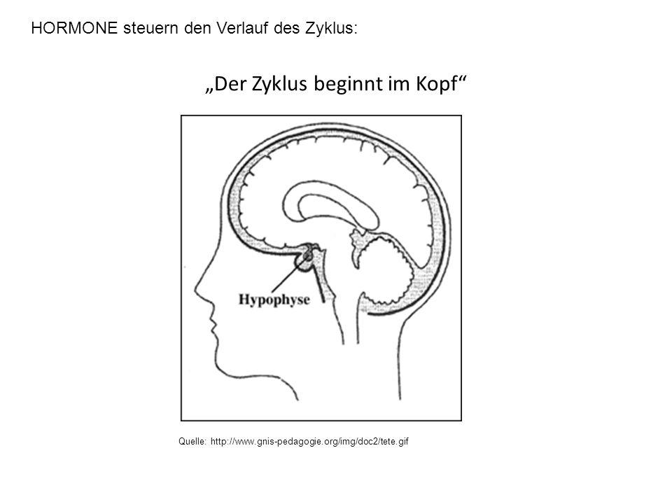 """""""Der Zyklus beginnt im Kopf"""