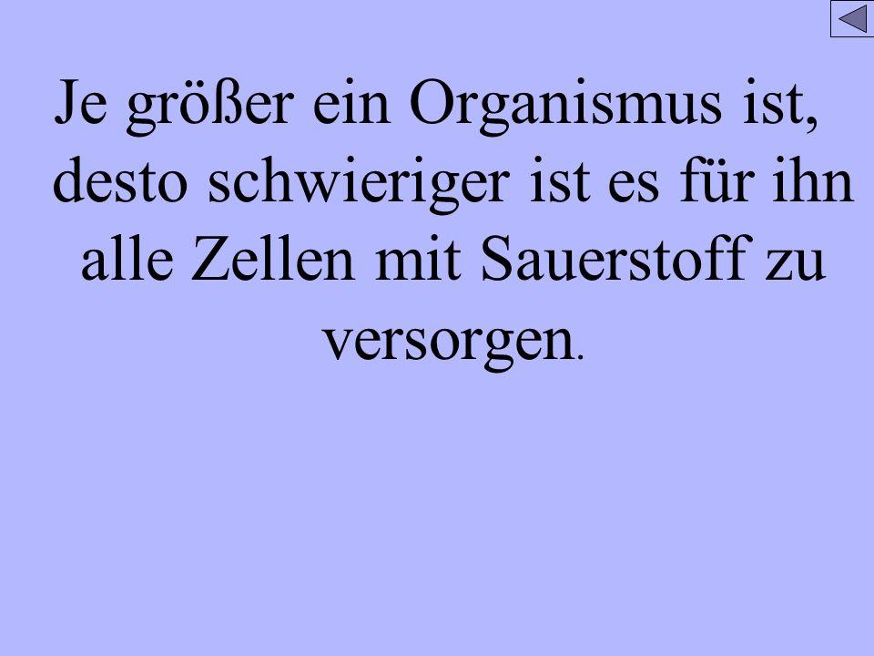 Je größer ein Organismus ist, desto schwieriger ist es für ihn alle Zellen mit Sauerstoff zu versorgen.