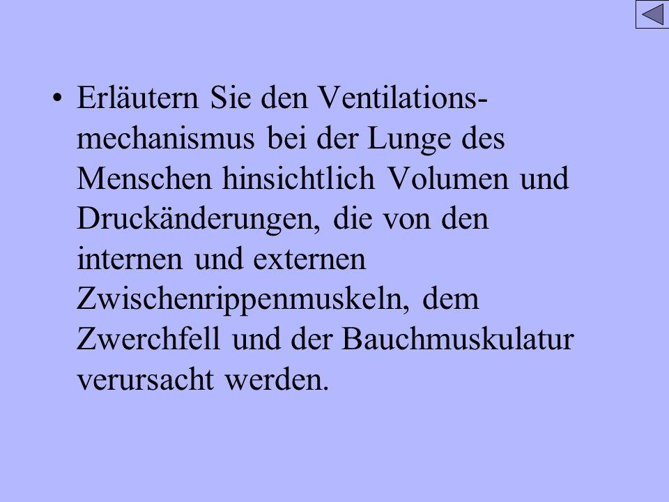 Erläutern Sie den Ventilations-mechanismus bei der Lunge des Menschen hinsichtlich Volumen und Druckänderungen, die von den internen und externen Zwischenrippenmuskeln, dem Zwerchfell und der Bauchmuskulatur verursacht werden.