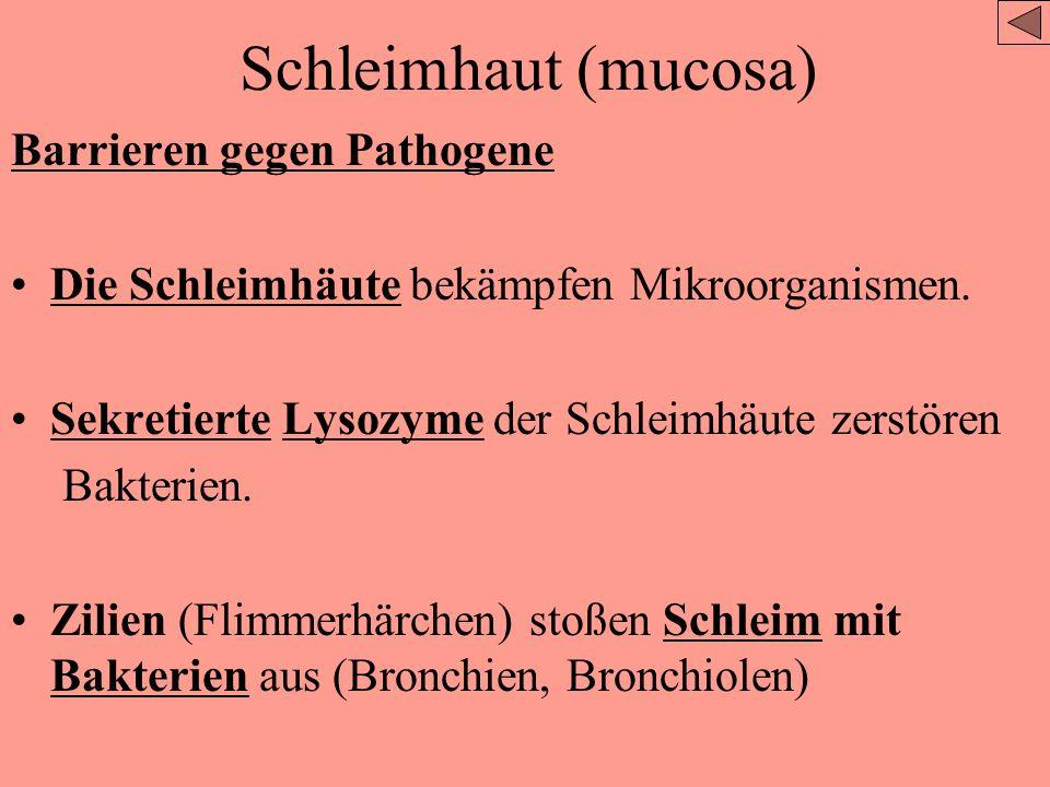 Schleimhaut (mucosa) Barrieren gegen Pathogene