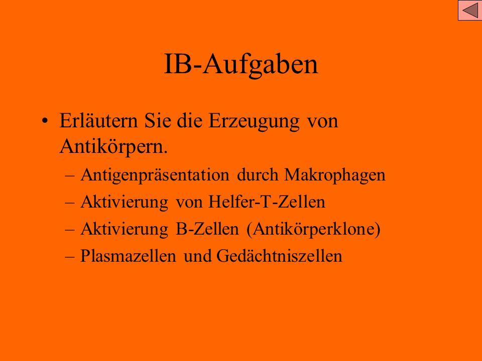 IB-Aufgaben Erläutern Sie die Erzeugung von Antikörpern.