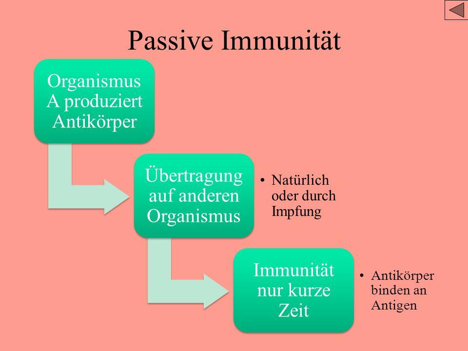 Passive Immunität Organismus A produziert Antikörper