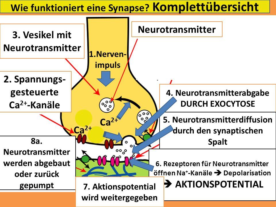 Wie funktioniert eine Synapse Komplettübersicht