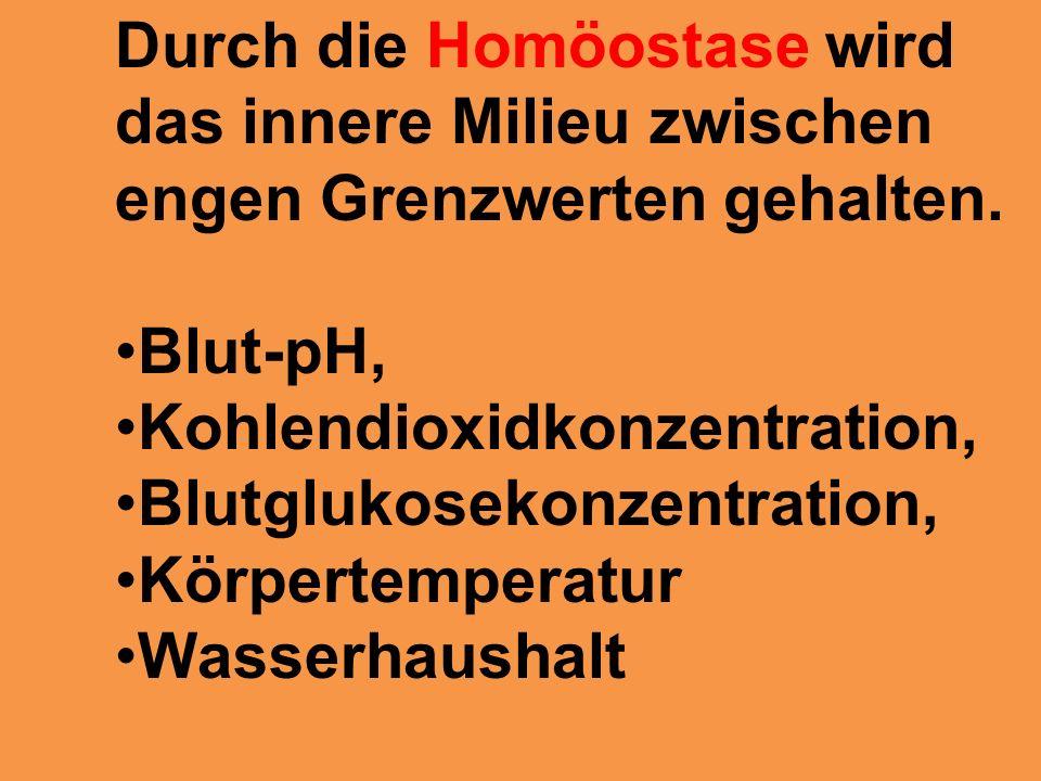 Fantastisch Was Ist Die Homöostase In Anatomie Und Physiologie Fotos ...