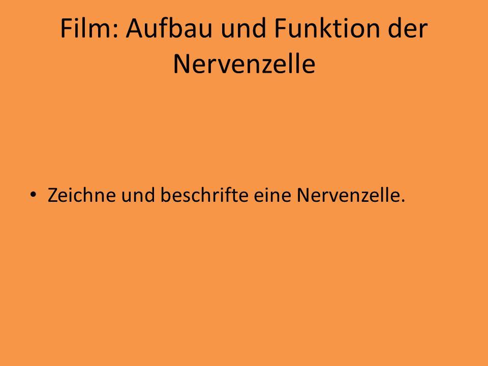Film: Aufbau und Funktion der Nervenzelle