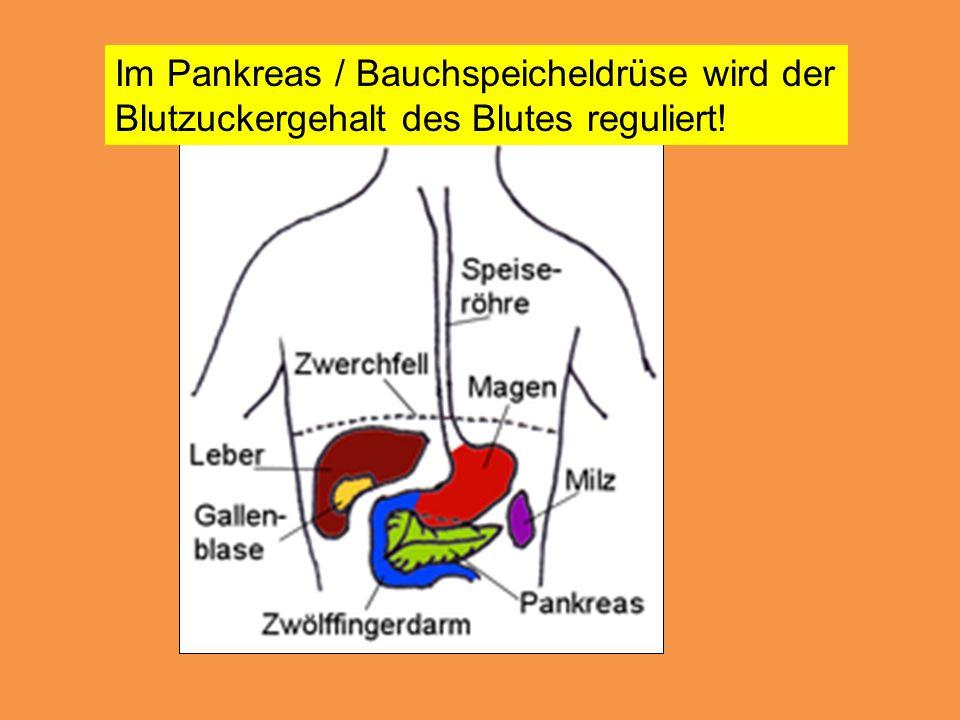 Im Pankreas / Bauchspeicheldrüse wird der Blutzuckergehalt des Blutes reguliert!