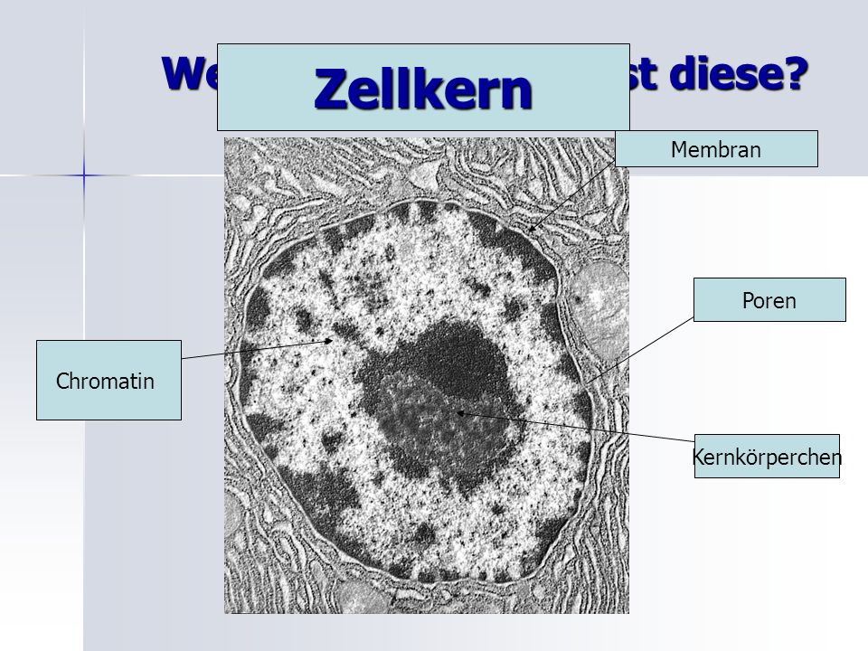 Welche Zellstruktur ist diese